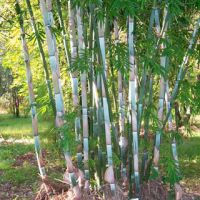 EXQUISITE JAPANESE BAMBOO FENCE