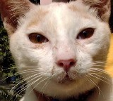 HOLISTIC REMEDIES for sick CATS, Don't call a                   COSTLY vet.