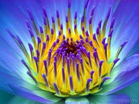 THE BLUE LOTUS FLOWER, symbol of God's perfection. TRUST HIM. ALIGN WITH HIM.