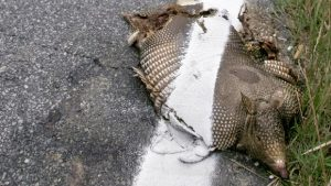 roadkill recipes, what can you eat if                           it's roadkill?